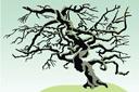 Кряжистое дерево
